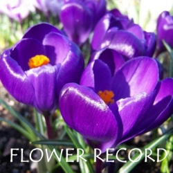 Flower-Record