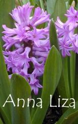 Anna-Liza