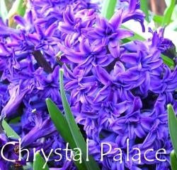 Chrystal-Palace