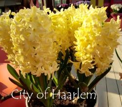 City-Of-Haarlem