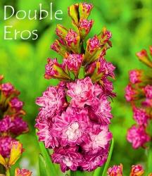 Double-Eros