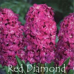 Red-Diamond