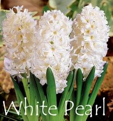 White-Pearl