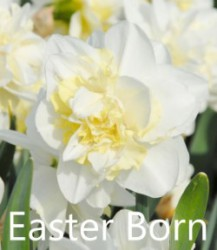 Easter-Born