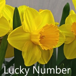 Lucky-Number